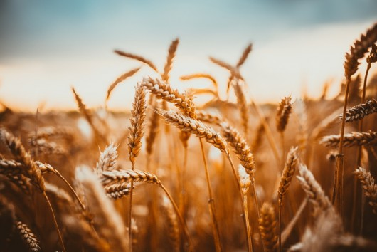 Media Partnership: Corteva Media Club - The Challenge of Food Security | The Global Food Security Index 2021