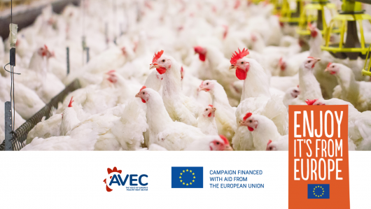 Reducing the use of antibiotics  in the meat sector