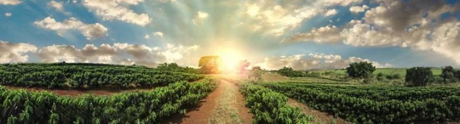Politique Agricole Commune : Quelle viabilité économique ?