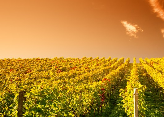 The future role of wine in society - From consumption to cultural heritage