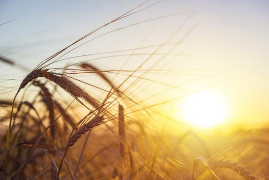 Neue Verfahren der Pflanzenzüchtung: Sind die Verbraucher ausreichend informiert?