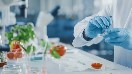 Between Farm and Fork: The role of innovative ingredients and food technology in achieving F2F objectives