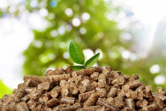Transitioning to renewables: What role for biomass?