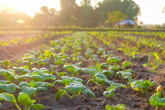Concrete measures for the food industry to go carbon-neutral
