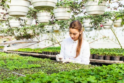 Auf dem Weg zur modernen Landwirtschaft: Balance zwischen Biodiversität, Innovation und Erträgen