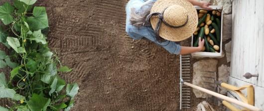 La stratégie « De la ferme à la fourchette » en France : cultiver et consommer bio