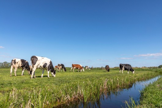 Data-driven actions as the key to deliver sustainability in the EU dairy sector?
