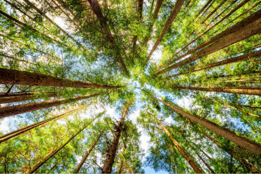 EU agenda for global forests - Getting the balance right