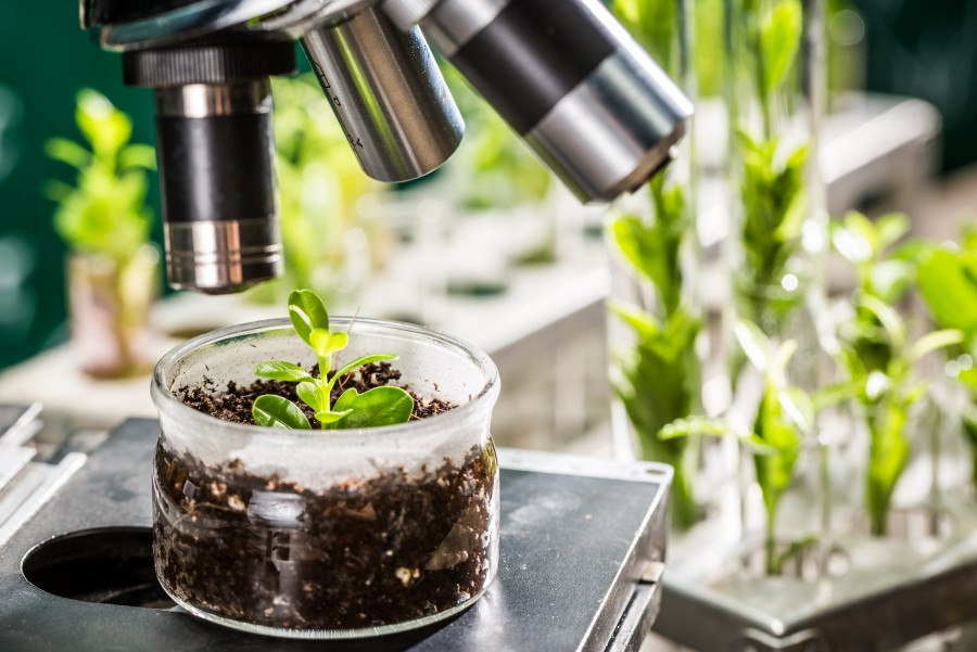 EU plant breeding regulation: Safeguarding agricultural innovation and consumers