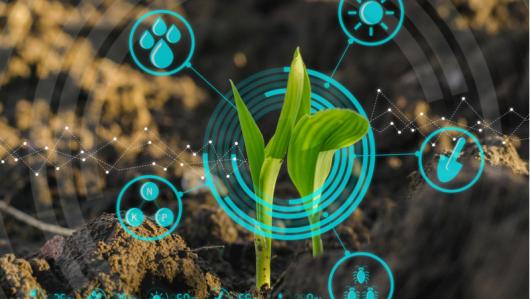 Modernisation de l'agriculture. Quel équilibre entre innovation et sécurité alimentaire ?